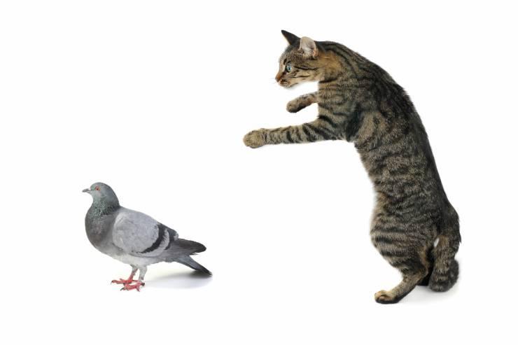 Il gatto ha mangiato l'uccellino