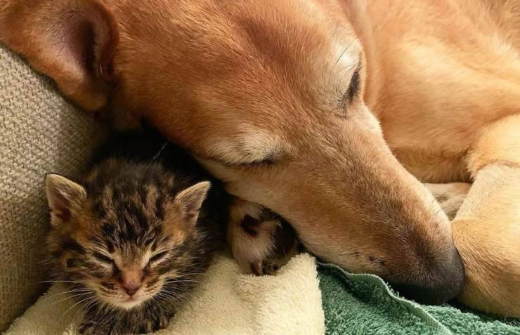 cane adotta gattini orfani