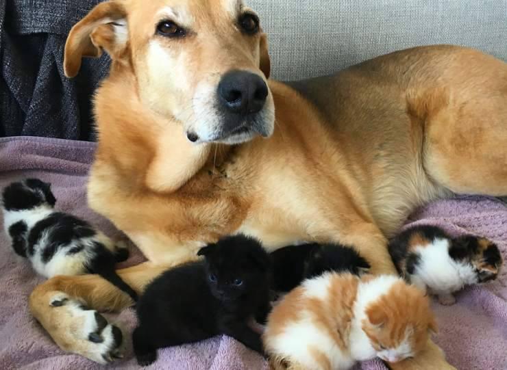 cane prende cura gattini