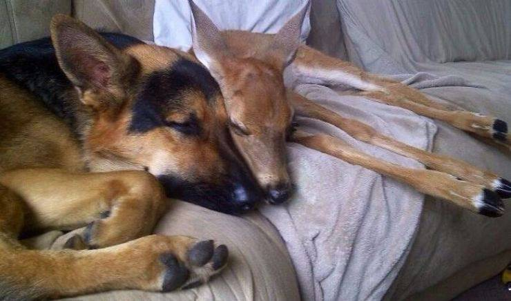 amicizia tra specie animali