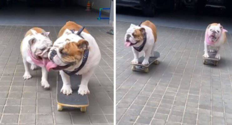 cani sfida sullo skateboard video