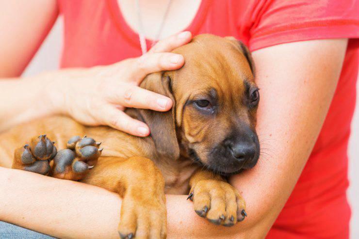 Cane vuole stare in braccio