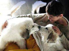 cane Belle e cuccioli