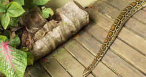 Serpente in casa