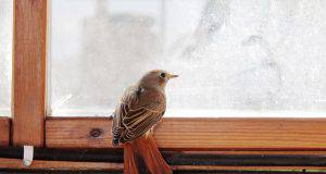 Uccellino in casa