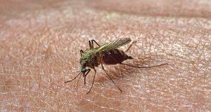 Zanzare e uomo