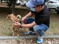 Il cane fedele (Foto Twitter)