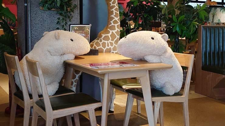 animali tavoli bar coronavirus