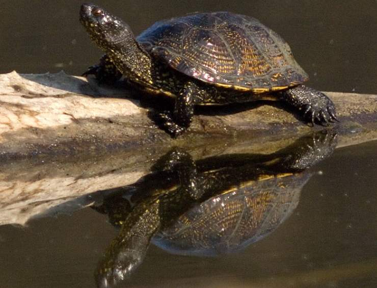 allarme tartarughe animali protette