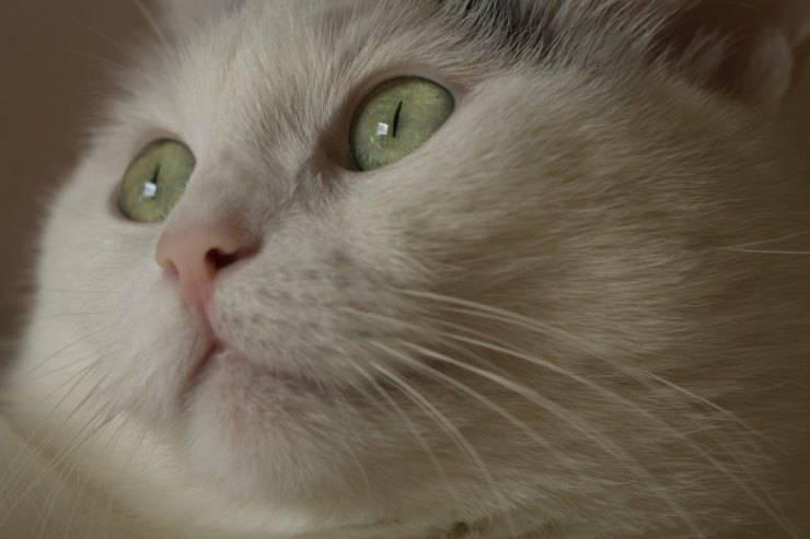 Il gatto guarda il vuoto