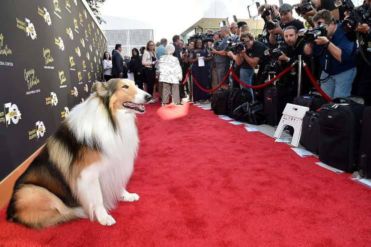 lassie animali attori vip star hollywood