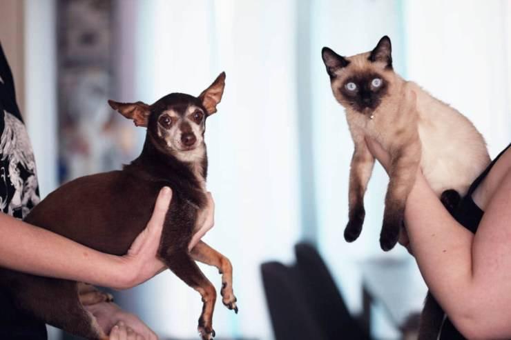 disinfettanti pericolo gatti scegliere