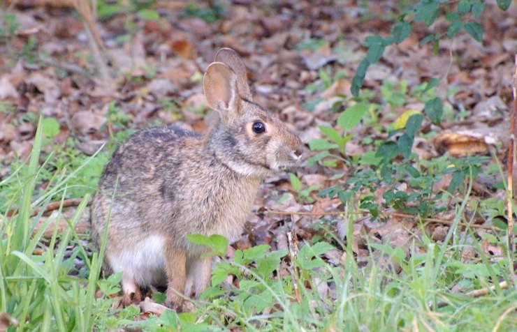 fatti insoliti conigli lepri