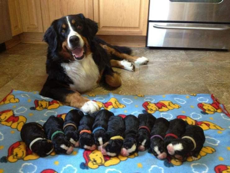 cane mamma cucciolata