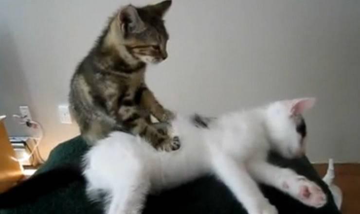 gatto ama fare pasta