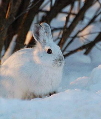 curiosità conigli lepri