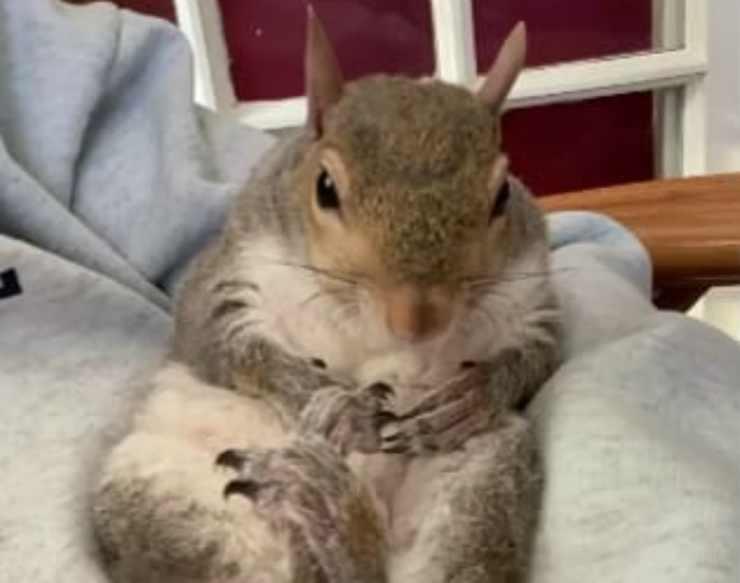 La tranquillità della scoiattolina (Foto Instagram)