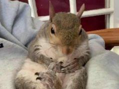 La scoiattolina serena (Foto Instagram)