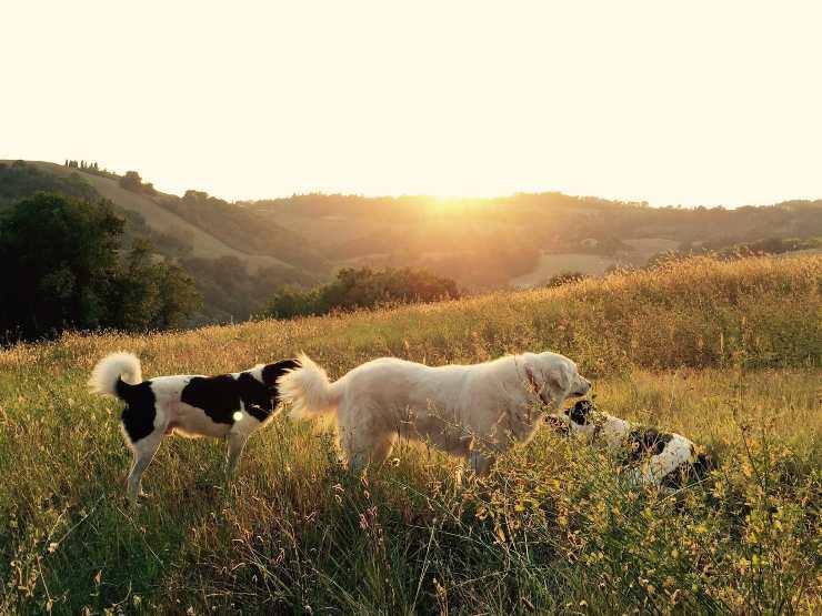 Storie di cani incredibili