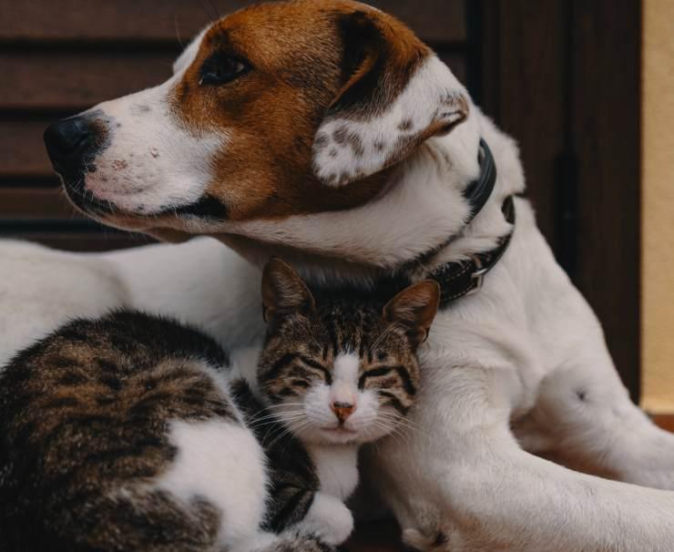 Cani che amano i gatti