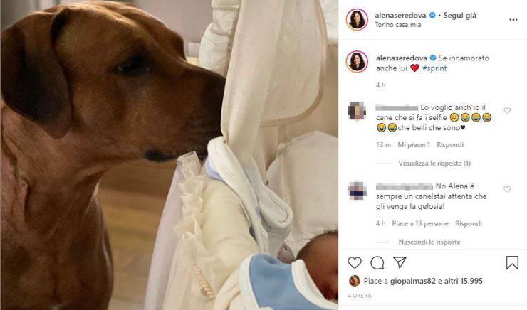 C:\Users\Chiara\Desktop\Articoli\Amore a 4 zampe\Video\alena seredova cane instagram
