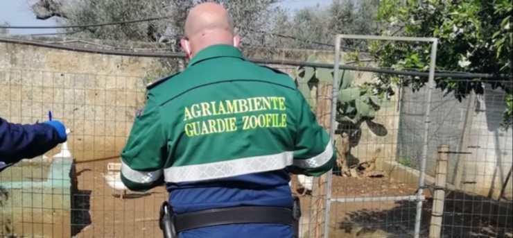 allevamento abusivo animali