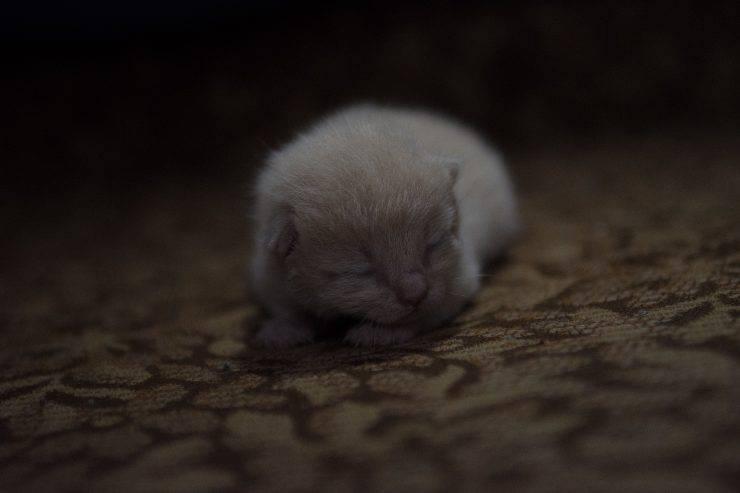 Nuovo micio in casa