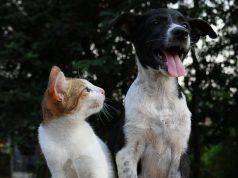 Cani che odiano i gatti