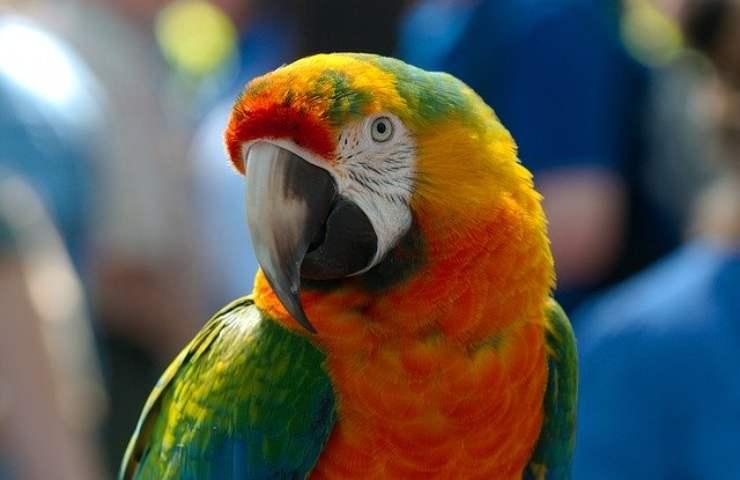 7 specie di uccelli più intelligenti