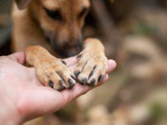 Infezioni alle unghie del cane