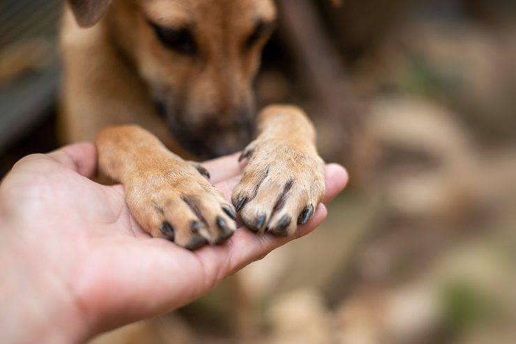 infezioni agli artigli del cane