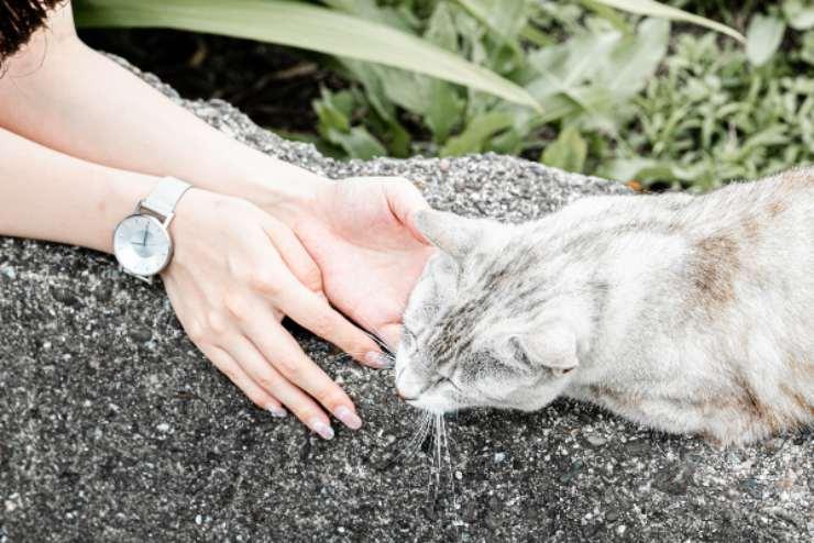 Ricevere rispetto dal gatto