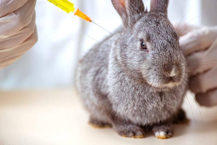avvelenamento nel coniglio