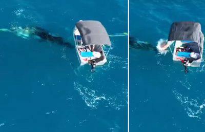 cucciolo di balena