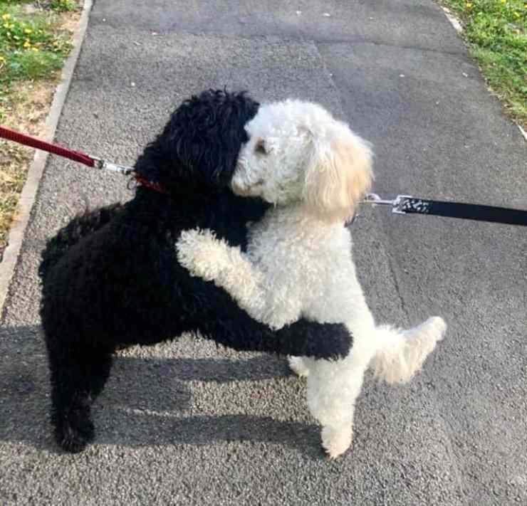 due cani si abbracciano