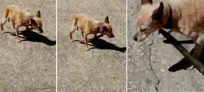 cane maltrattamento
