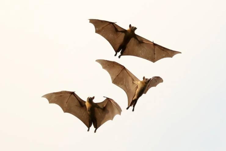 I pipistrelli ci insegnano lezioni di vita
