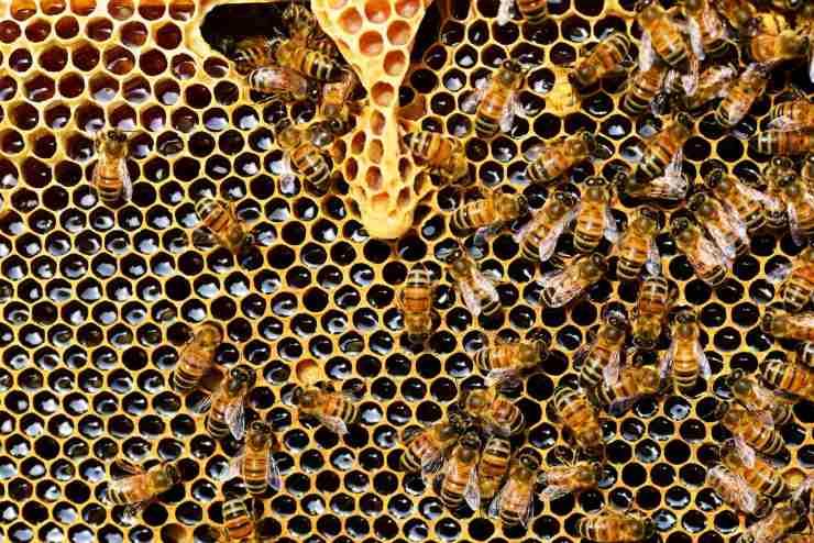 alveare api