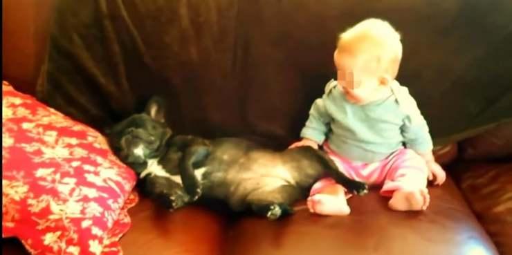 Bambina ride per il cane
