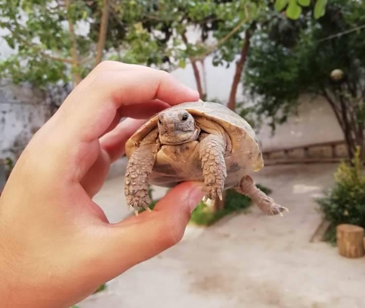 Tartaruga centenaria