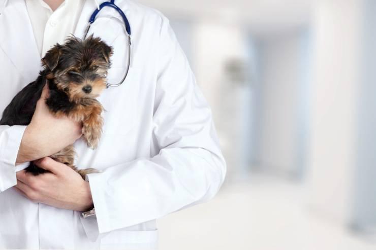 Vaccini del cane: quali sono gli obblighi e come funzionano