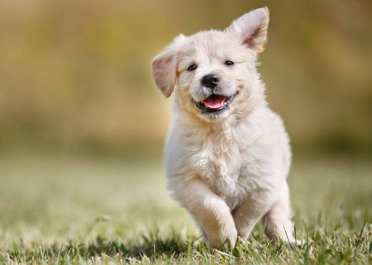 Quanto esercizio fisico devono fare i cuccioli?
