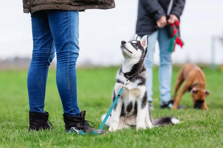 Esercizio fisico per i cani: quanto ne serve e come farlo al meglio