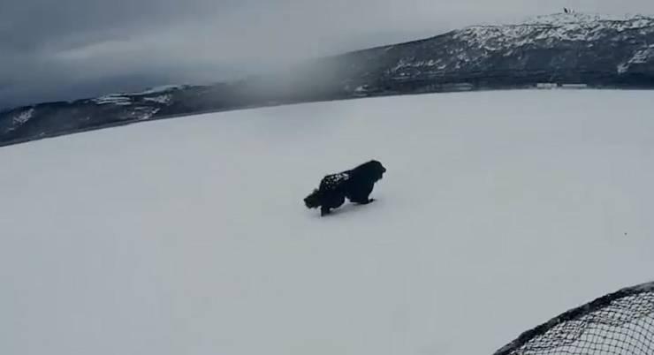cane abbandonato ghiaccio