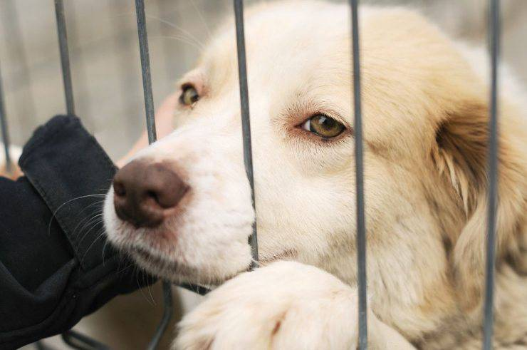 cane adottato rifugio