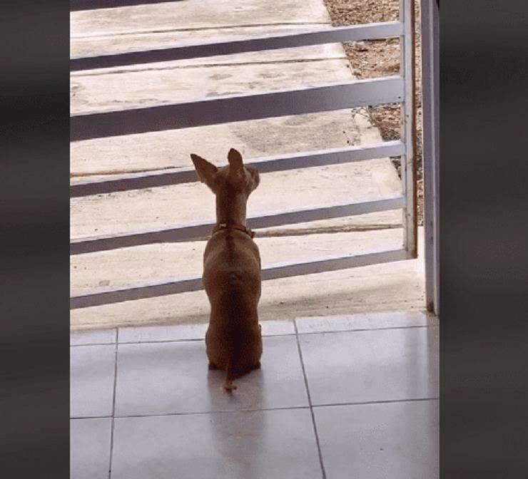 cane aspetta padrona casa