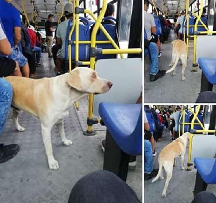 cane smarrito cerca padrone