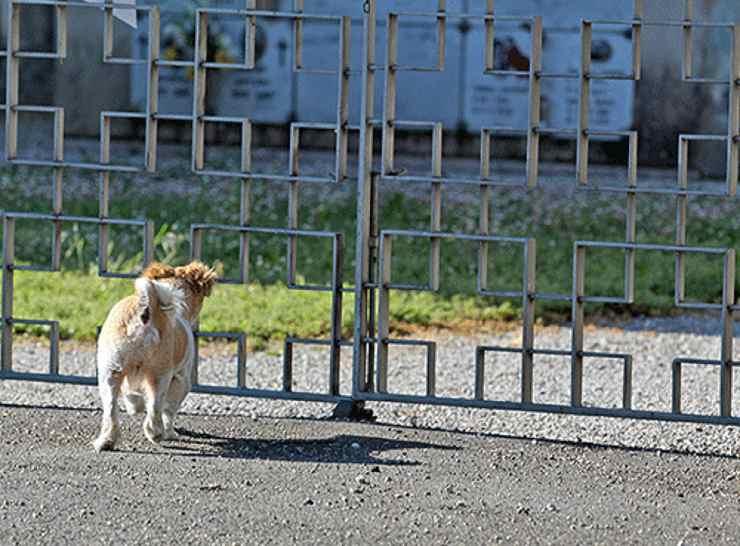 cane cimitero padrone