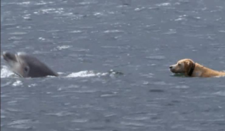 cane nuotare delfini