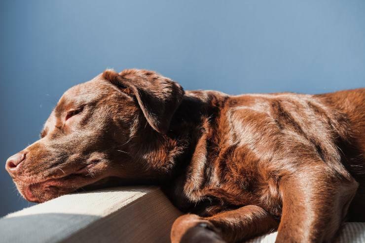 cane dorme molto